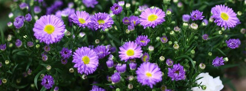 WedReviews - סידורי פרחים - ולדיס פרחים ועיצוב | vladis