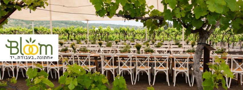 WedReviews - הפקת אירועים - Bloom | אירועים בטבע ובמקומות מיוחדים